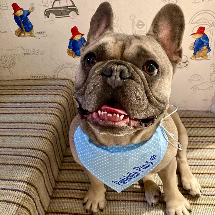 Dog Groomer W10