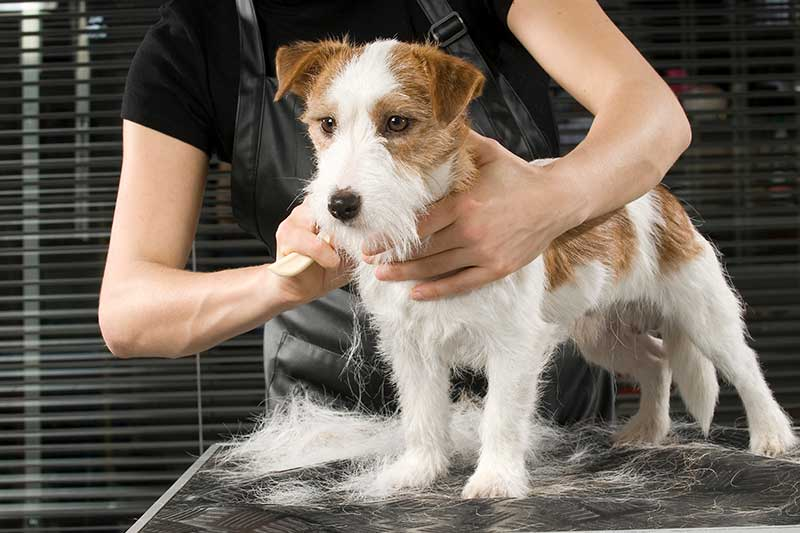 Dog grooming West London